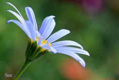 "<span class=""ssssschl"">Macro</span> flower! by THOMAS Patrice"