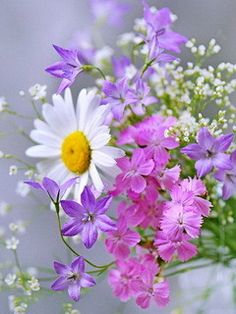 Download Flowers Mobile Wallpaper | Mobile Toones