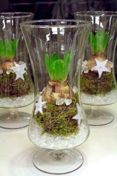 Bulbs in glass