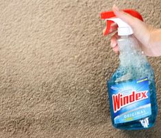 remove carpet stains with the basic windex