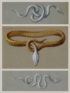 Boucheron introduces Serpent Bohème