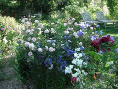Cecile Brunner and LD Braithwaite roses Garden Design, Roses, Explore, Plants, Pink, Rose, Landscape Designs, Plant, Planets