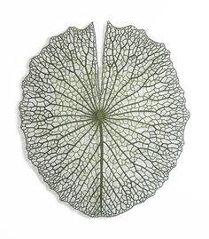 'Giant Lilypad' (2015), embroidery thread and pins on paper by Meredith Woolnough