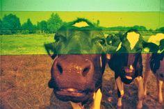 DIYRainbow Filter (c) Lomoherz.de, lomo