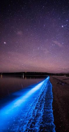 Bioluminescence in Tasmania. Nature Aesthetic, Blue Aesthetic, Landscape Photography, Nature Photography, Sea Of Stars, Beautiful Places To Travel, Natural Phenomena, Aesthetic Pictures, Beautiful Landscapes