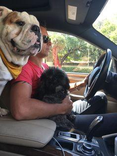 #brooklyn #brooklynmood #englishbulldog #bulldog #bulldoglover #dog #dogstagram #doglove #doglover #doggram #doglove #pet #petlover #petstagram  #friend #adorable #cute