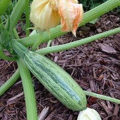 Tips on Harvesting Your Vegetables
