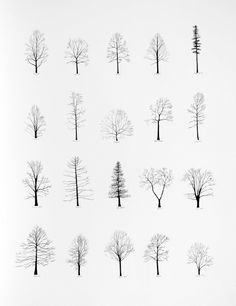 ~ simple. pure. perfect. everlytrue:  Trees [by Katie Holten]