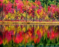 Fall foliage in Arcadia National Park, Mount Desert Island, Maine.
