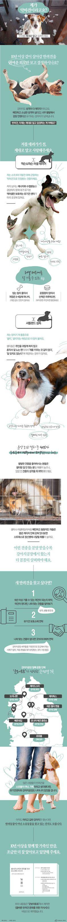 반려견, 제대로 알고 길러주세요 [인포그래픽] #pet / #Infographic ⓒ 비주얼다이브 무단 복사·전재·재배포 금지 Ppt Design, Event Design, Graphic Design, Pop Up Banner, Event Page, Sustainable Design, Exotic Pets, Animal Design, Design Reference