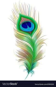Illustration of Peacock feather. Isolated on white vector illustration vector art, clipart and stock vectors. Peacock Feather Tattoo, Peacock Wall Art, Feather Drawing, Feather Vector, Peacock Painting, Feather Art, Fabric Painting, Bird Feathers, Peacock Feathers Drawing