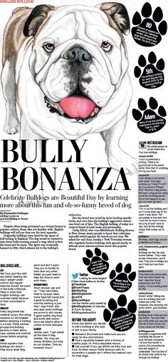 I designed a features page about the English bulldog to celebrate Bulldogs are Beautiful Day.