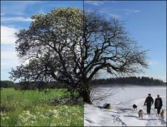 Diptych Photography : The Art Of Combining Two Images  http://pixelcurse.com/photography/diptych-photography-the-art-of-combining-two-imagessummer_vs_winter_12