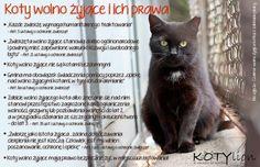 Znalezione obrazy dla zapytania otwórz kotkowi okno piwnicy fotki