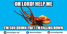 Memes Octopus Funny Animal Memes, Funny Animals, Im Falling, Marine Biology, Octopus, How To Find Out, Funny Animal, Calamari, Humorous Animals