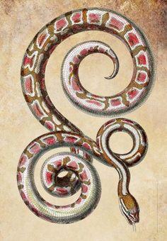 pink snake png file clip art stamp Digital by DigitalGraphicsShop -- facing up tho