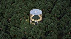 Casa é construída em volta de árvore de maneira totalmente integrada à natureza