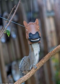Squirrel Gets Head Stuck Inside Feeder Shaped Like Horse's Head