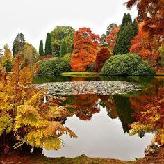 Colorful vegetation
