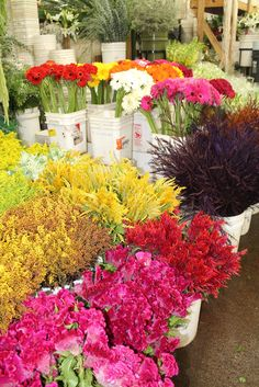We love the Flower Mart's gorgeous array of seasonal colors. This is our first-and-only stop to find the freshest flowers at an unbelievable price.