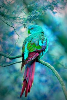 The colors of this PaRRoT are so beautiful!