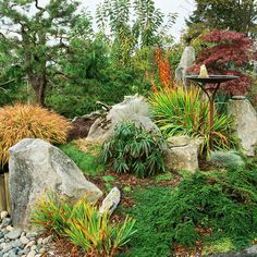 Extend the gardening season by incorporating fun fall foliage and evergreens into your rock garden. In this Asian-style vignette, large boulders anchor plantings of Japanese and Siberian irises, which feature foliage highlighted with dramatic tips of gold. A native shore pine in the background shows off a sculptural form in keeping with Japanese garden design.