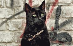 "Cat Behemoth of ""Master and Margarita"" by Bulgakov :)"