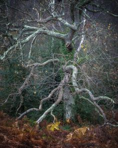 Old Man of the Wood, West Sussex, England by Richard Corkrey  Old tree photographed on Woolbeding Common in the South Downs National Park in England.   Did you enjoy this post?  Then please share it and let your friends know about it.          FacebookTwitterShare on Google+                    http://lp-mag.com/5v98
