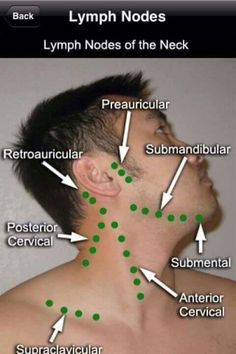 Lymph Nodes of the neck