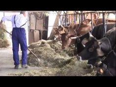 Storie di agricoltura - Il Noè delle mucche Food Marketing, Goats, Horses, Horse, Goat