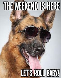 German shepherd in dark sunglasses. Weimaraner, I Love Dogs, Cute Dogs, Friday Dog, Friday Pics, German Shepherd Puppies, German Shepherds, Animal Magic, Schaefer