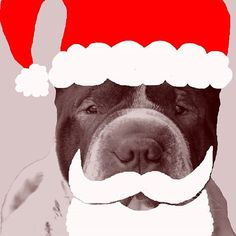 Santa dog is ready for Christmas 😂. Happy advent season 💞. __ Dein Liebling, meine Kamera, unser Fotoshooting ➡ Ich freu mich auf deine Anfrage ☺ __ Kingston from @malous_rabaukenbande __ Nikon D3100, AF-S Nikkor 18-55mm 3.5, Photoshop Elements 6 __ Www.maloutainment.WordPress.com