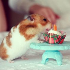 Ooooo...I'll bet this is carrot cake!The carrot candle gives it away,tee hee! My human knows what I like.