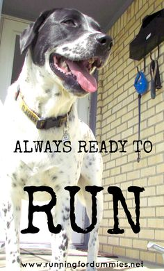 RUNNING FOR DUMMIES: According to Ollie: Running Lessons From My Dog