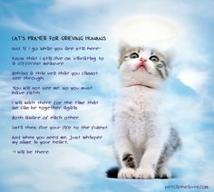 Loss of Cat Prayer | Cat's prayer for grieving humans - I Believe In Cat Heaven : I Believe ...