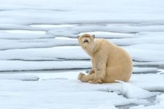 Cat Vs Polar Bear The Most Weird And Scary Photoshopped Hybrid Animals You'll Ever See Funny Cute, Really Funny, Hilarious, Photoshopped Animals, Brown Bear, Funny Photos, Scary, Weird, Cute Animals