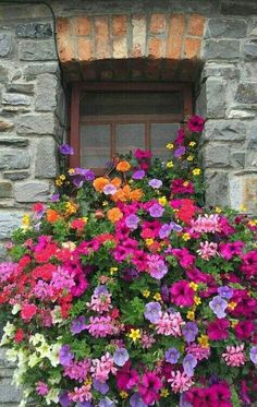 Beautiful blooms in window box Window Box Flowers, Window Boxes, Beautiful Flowers, Balcony Flowers, Colorful Flowers, Dream Garden, Box Garden, Garden Inspiration, Color Inspiration