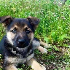 Fbsocialpet.com: il social forum per cani, gatti, cavalli, tutti gli animali