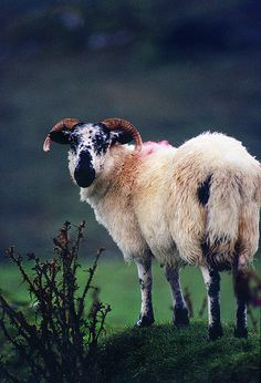 Donegal, Ireland by josullivan.59
