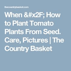 When / How to Plant Tomato Plants From Seed. Care, Pictures | The Country Basket