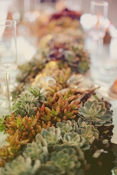 Succulent table runner  Succulent Inspiration  For more ideas, see www.oregonsucculents.com