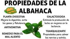 propiedades de la albahaca Health And Nutrition, Health Fitness, Traditional Chinese Medicine, Natural Home Remedies, Medicinal Plants, Health Advice, Alternative Medicine, Natural Medicine, Health Remedies