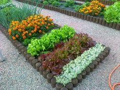 Как просто использовать бархатцы в защите растений от болезней и вредителей - Садоводка