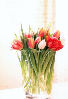 I love tulips they have a mind of their own