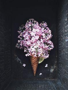Lilacs | Call me cupcake