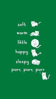 Soft kitty ♡ #sheldon #tbbt #quote #song