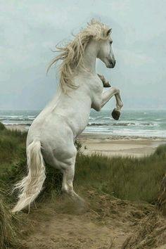 Лошадь около моря
