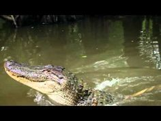 New Orleans Swamp Tours - Inspirationen und Reiseideen New Orleans With Kids, Down In New Orleans, New Orleans Swamp Tour, New York City, New Orleans Bachelorette, New Orleans Travel, Holiday Places, Tours, Road Trip Usa