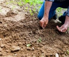 Here are 50 hobbies for men that can improve your life! This list of hobbies for men is perfect for every single adult man! Plan Potager, Potager Bio, Vegetable Garden Soil, Vegetable Garden Planning, Permaculture, Horticulture, Conservação Do Solo, Best Hobbies For Men, Planta Vascular
