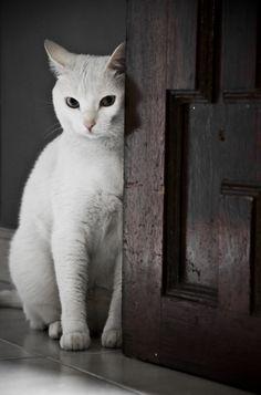 view topic quiet storage of cat s chicken smoothie